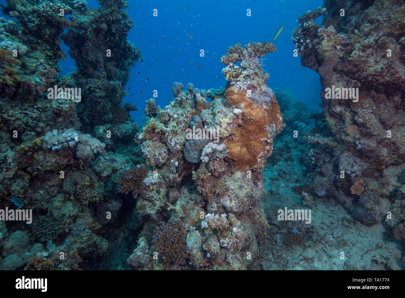 Few living remnants remain on dying coral reefs in the Red Sea. Southern Egypt. Stock Photo