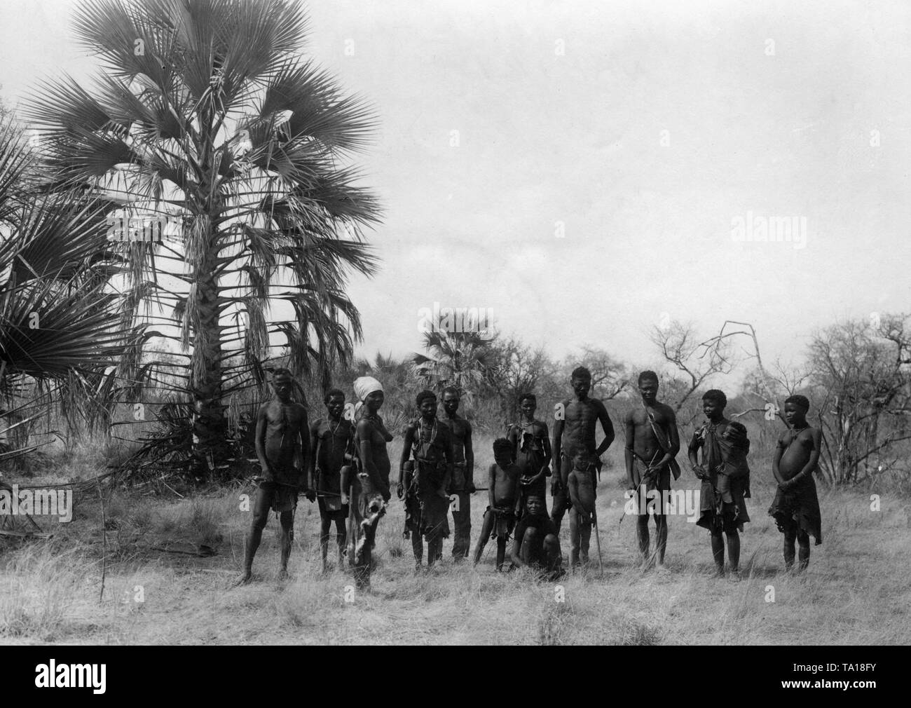 A San (Bushmen) family equipped with hunting weapons on a grassy area in German Southwest Africa. - Stock Image