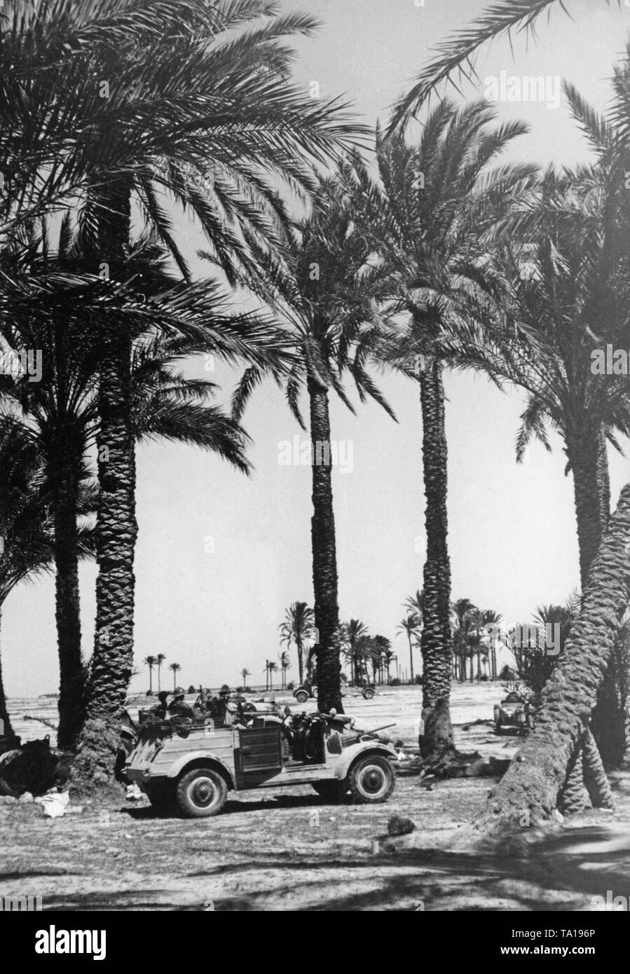 A VW Kuebelwagen of the German Wehrmacht parked between palm trees in Benghazi in Libya. - Stock Image