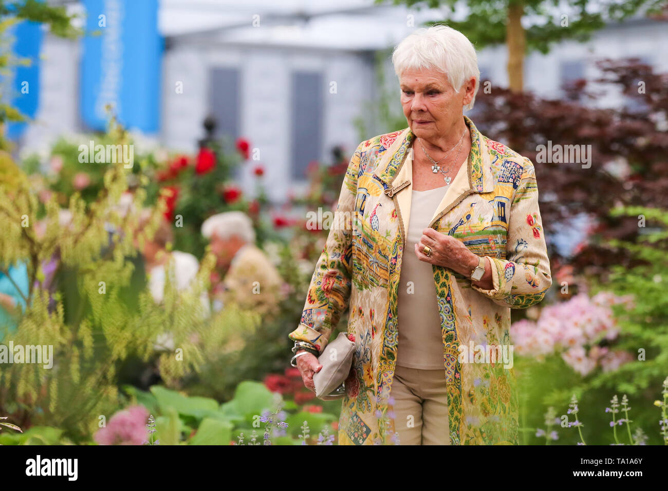 Dame Judith Dench is seen at the Hillier Nurseries.  The Royal Horticultural Society Chelsea Flower Show is an annual garden show over five days in the grounds of the Royal Hospital Chelsea in West London. The show is open to the public from 21 May until 25 May 2019.    Dame Judith Dench seen during the Chelsea Flower Show. The Royal Horticultural Society Chelsea Flower Show is an annual garden show over five days in the grounds of the Royal Hospital Chelsea in West London. The show is open to the public from 21 May until 25 May 2019. Stock Photo