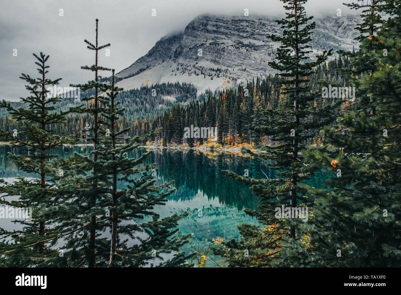 Reflections of pine trees off Swift Current Lake in Glacier National Park, Montana, USA in the fall - Stock Image