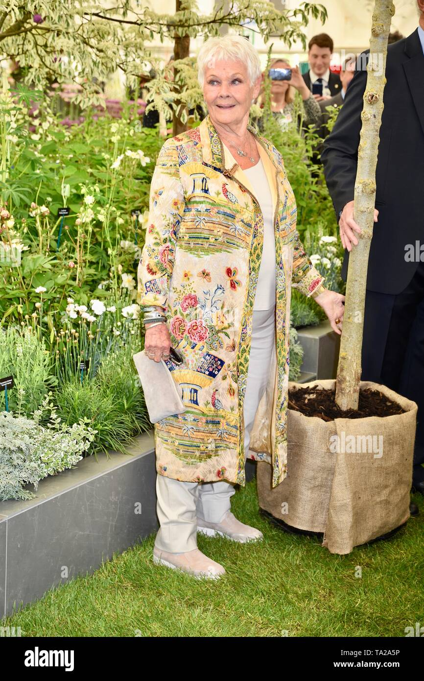 Dame Judi Dench was presented with a sapling elm tree to launch the re-elming of the British Countryside starting this year. Hillier Nurseries, RHS Chelsea Flower Show, Press Day, London Stock Photo
