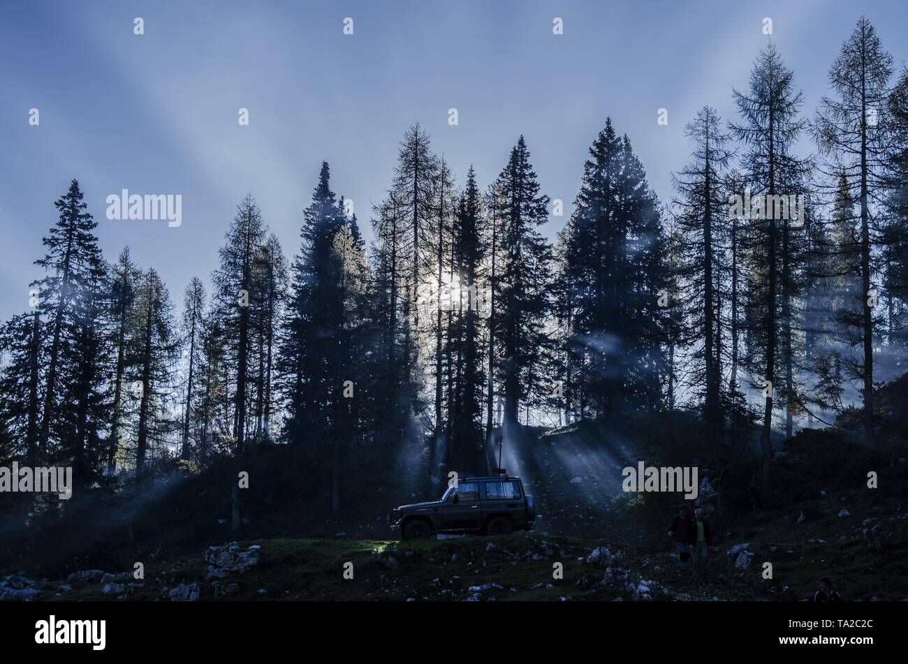 A 4x4 car on a hill in a forest with tall trees with sunlight shining through - Stock Image