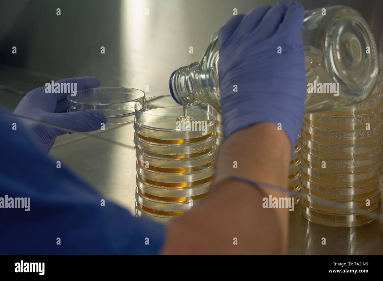 Scientist at work - Stock Image
