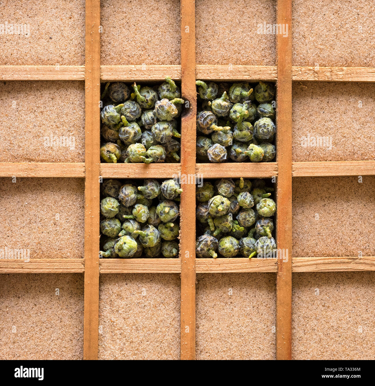 Pine nuts and sand in wooden boxes - Stock Image
