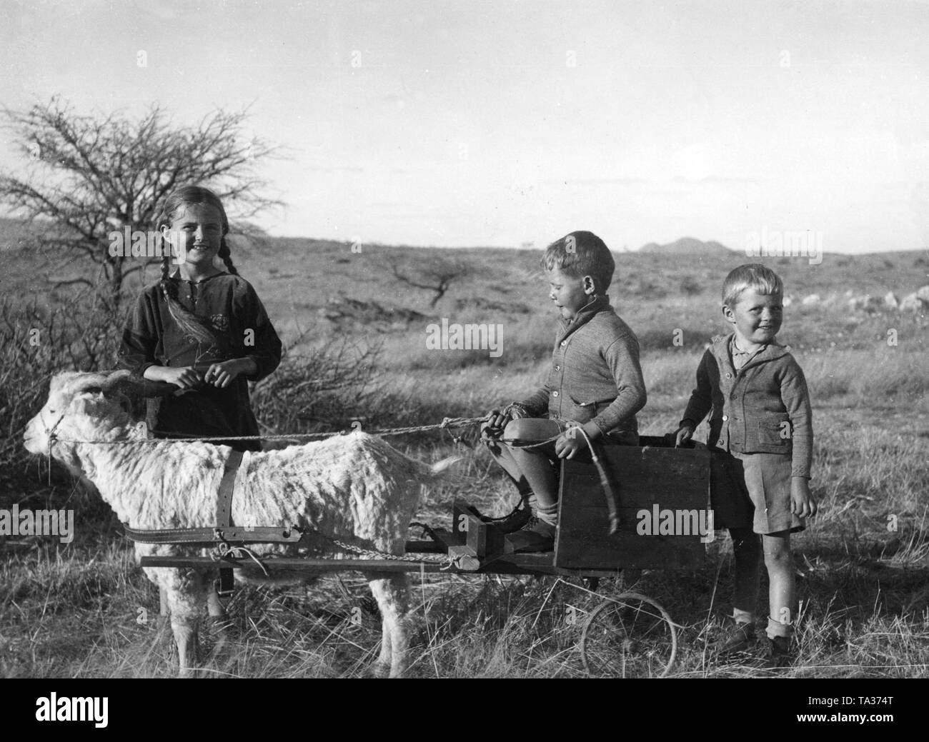 Three German children with an Angora goat and a cart near Windhoek, in the former German colony of German South West Africa. - Stock Image