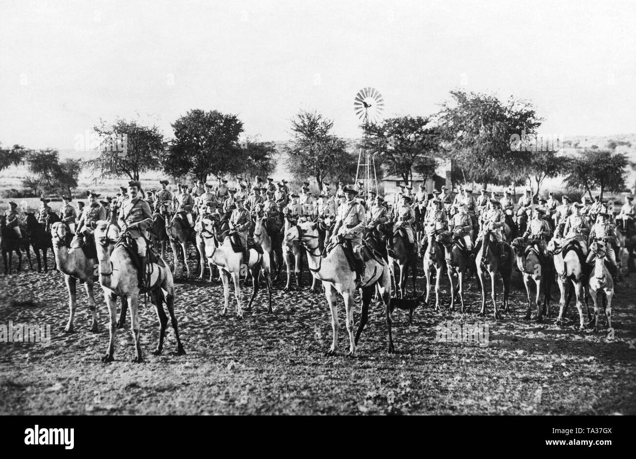 The Camel Corps of the German Schutztruppe in the former colony of German South West Africa celebrate the 25th anniversary of the Battle of the Waterberg. That was the decisive battle in the rebellion of the Herero and Nama (Hottentots), which led to the victory of the German colonialists over the natives. - Stock Image