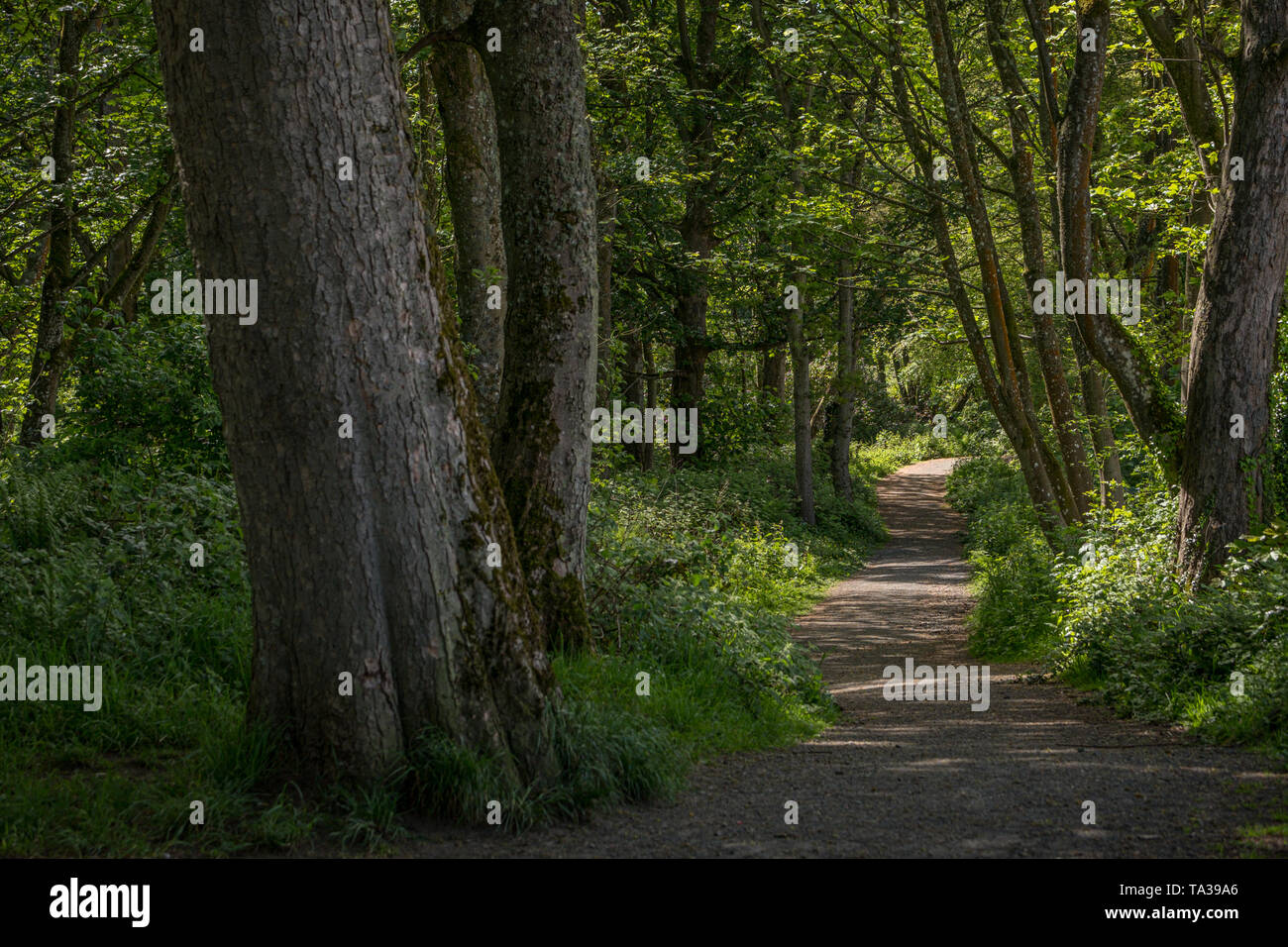 The fairy glen footpaths of Fullerton Park in Troon Scotland - Stock Image
