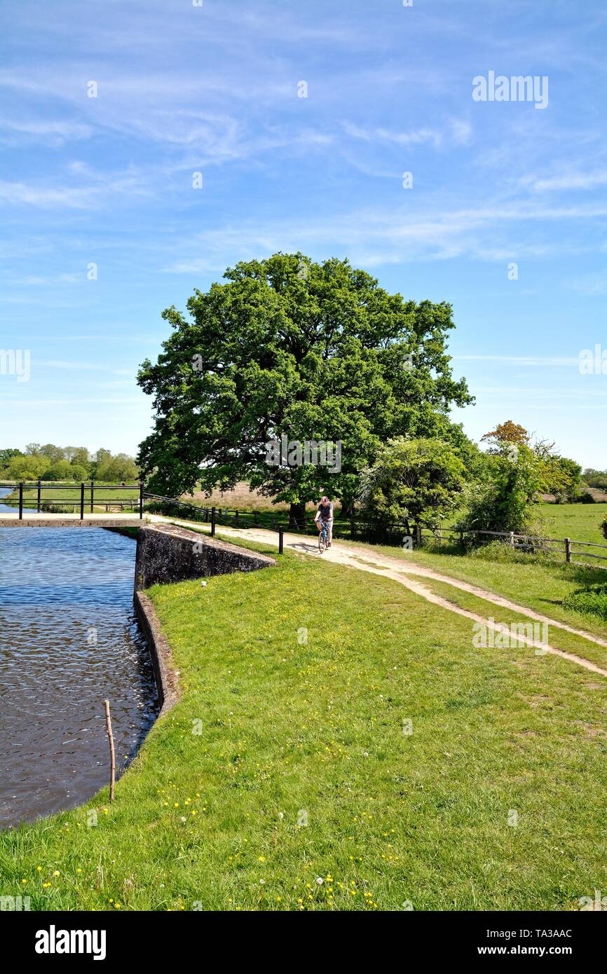 A single male cyclist on the towpath by the River Wey Navigation at Papercourt lock on a summers day, Ripley Surrey England UK - Stock Image
