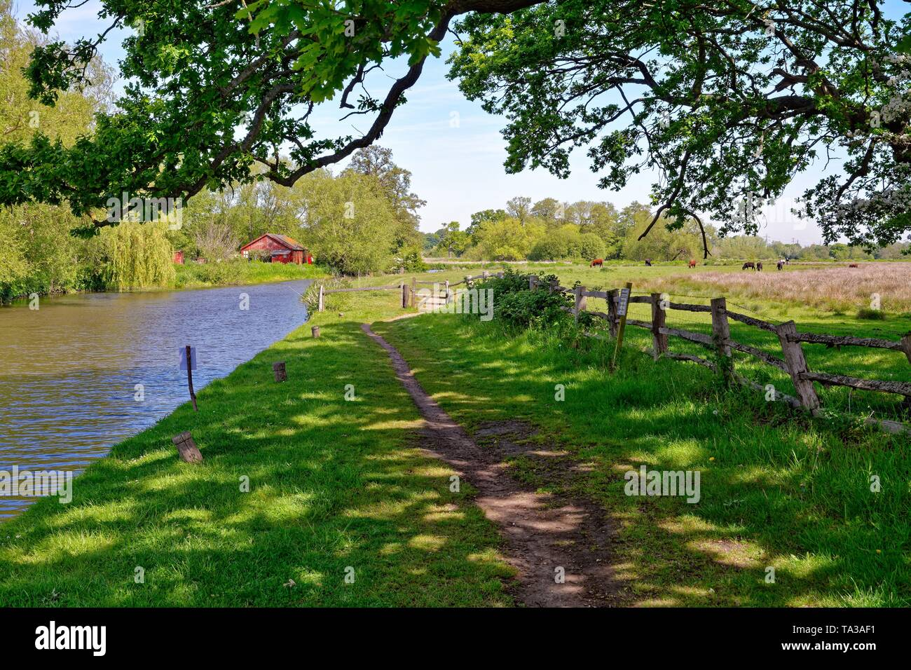 The River Wey navigation near Papercourt lock on a summers day,Ripley Surrey England UK - Stock Image