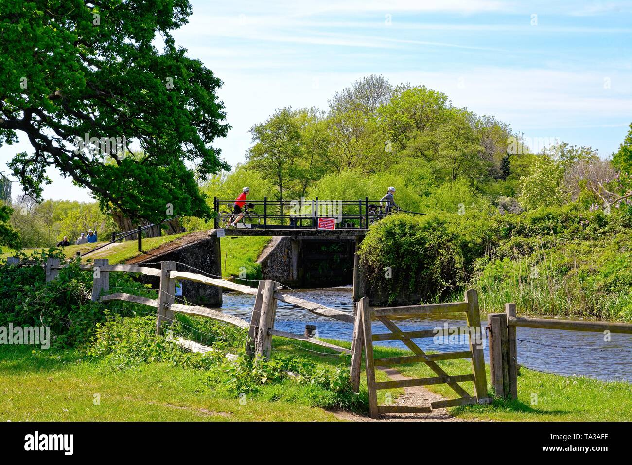 The River Wey Navigation approach to Papercourt lock Ripley Surrey on a summers day, England UK - Stock Image