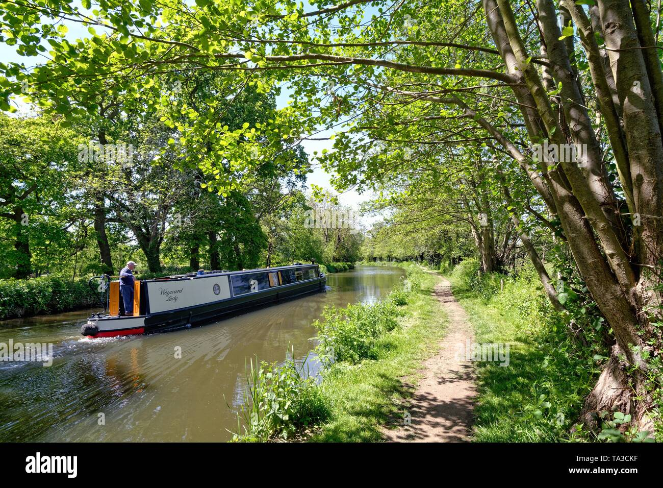 A narrow boat cruising on the River Wey navigation near Newark Abbey on a summers day near Ripley Surrey England UK - Stock Image