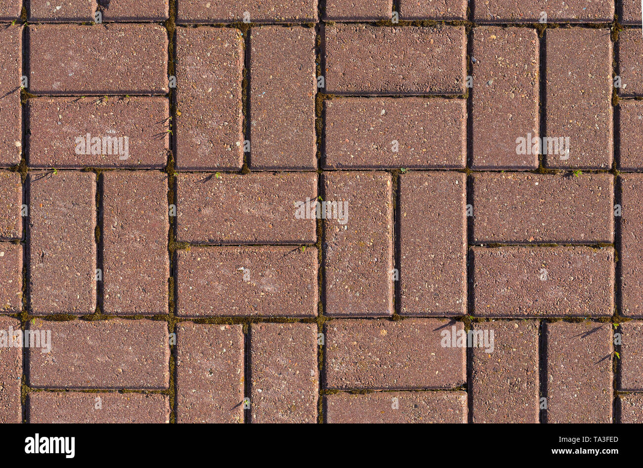 Red bricks floor texture with moss - Stock Image