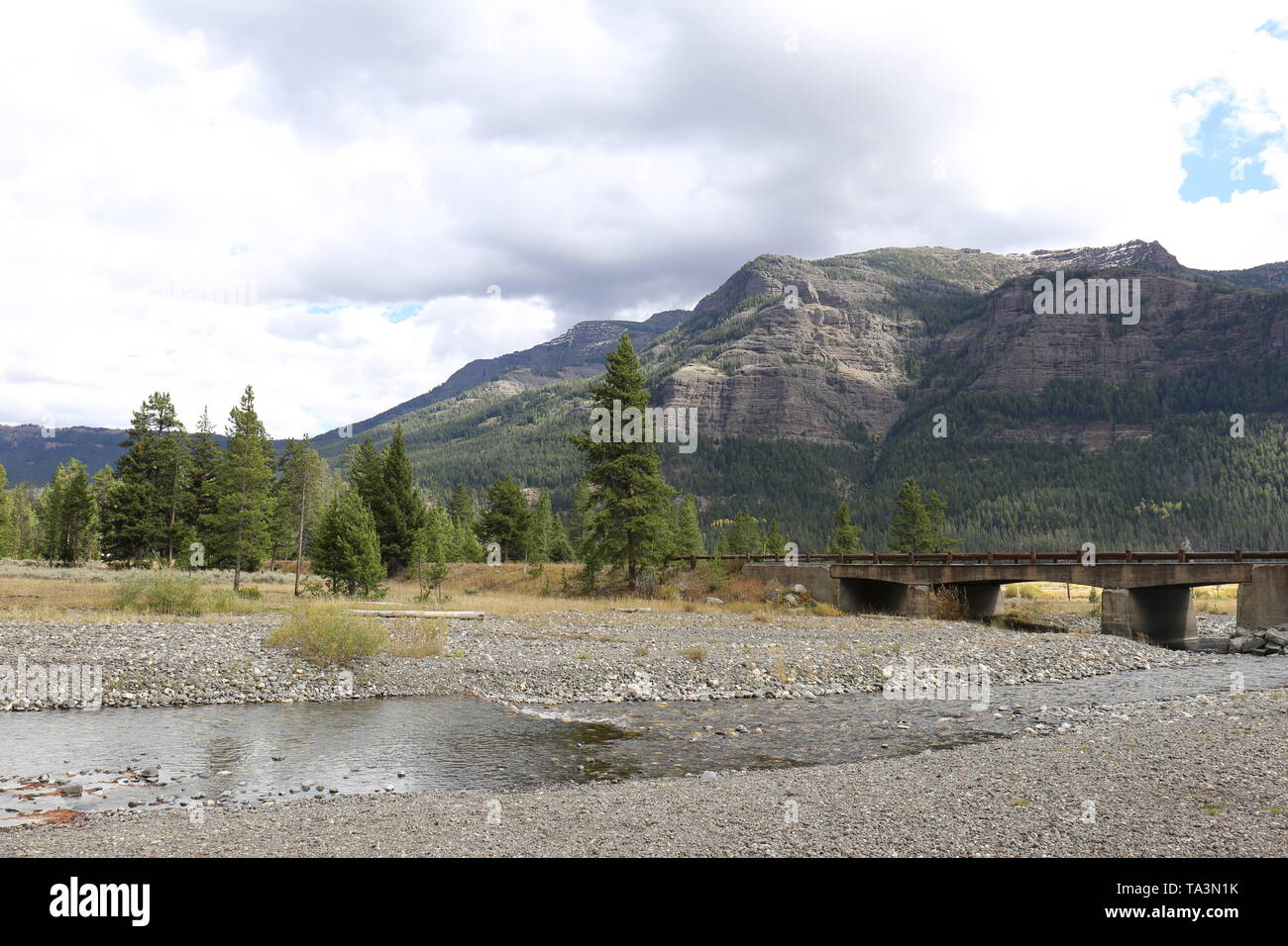 Pebble Creek at Yellowstone National Park with coniferous trees and mountain in the background - Stock Image