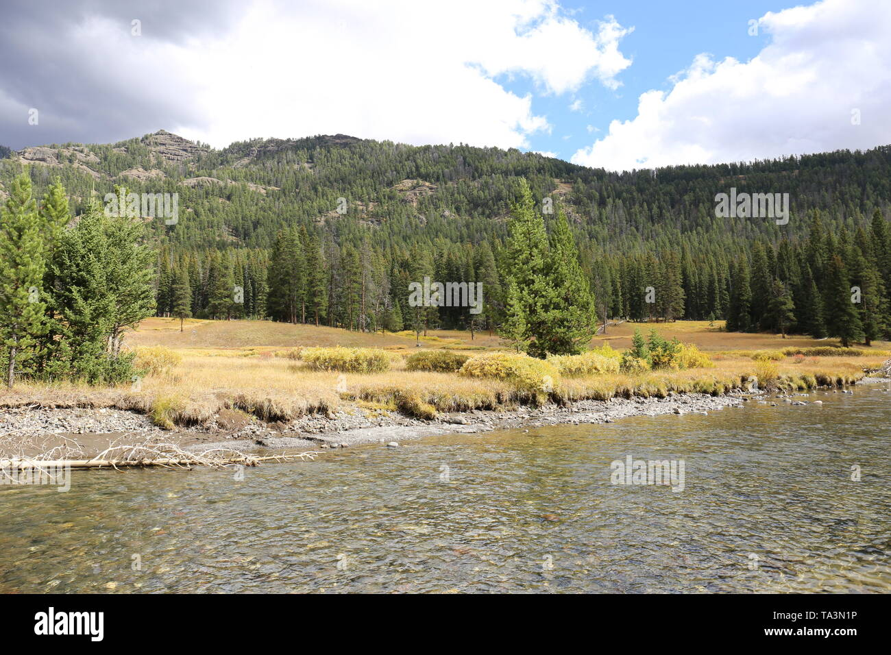 Stony river with a small, forested mountain in background - Stock Image