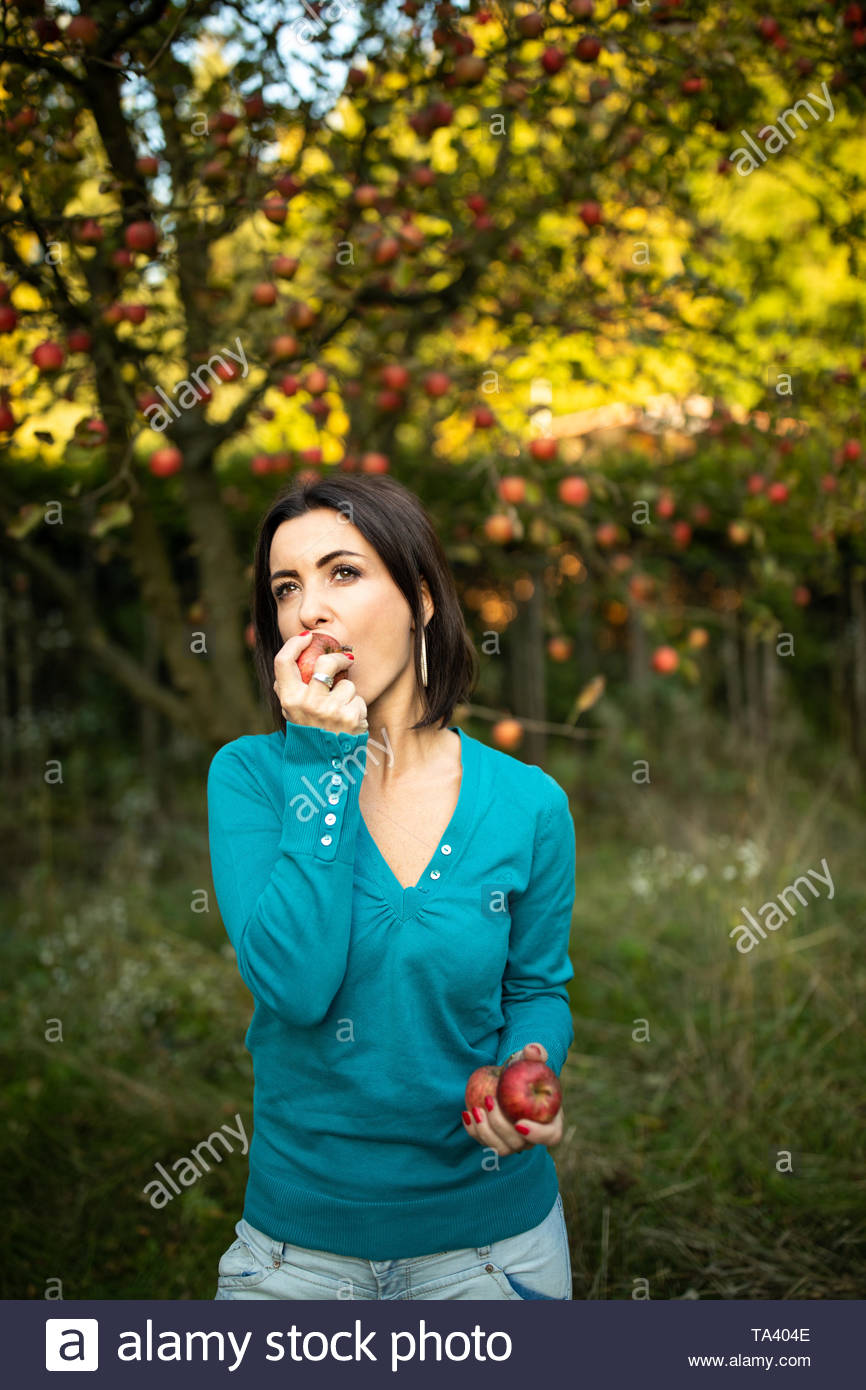Cute young woman picking apples in an orchard having fun harvesting the ripe fruits of her family's labour(color toned image) - Stock Image