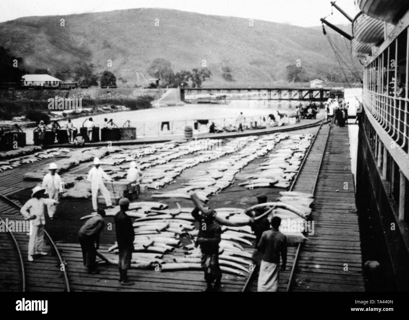Loading of ivory in the port of Tiko. In the background, Mount Cameroon. - Stock Image