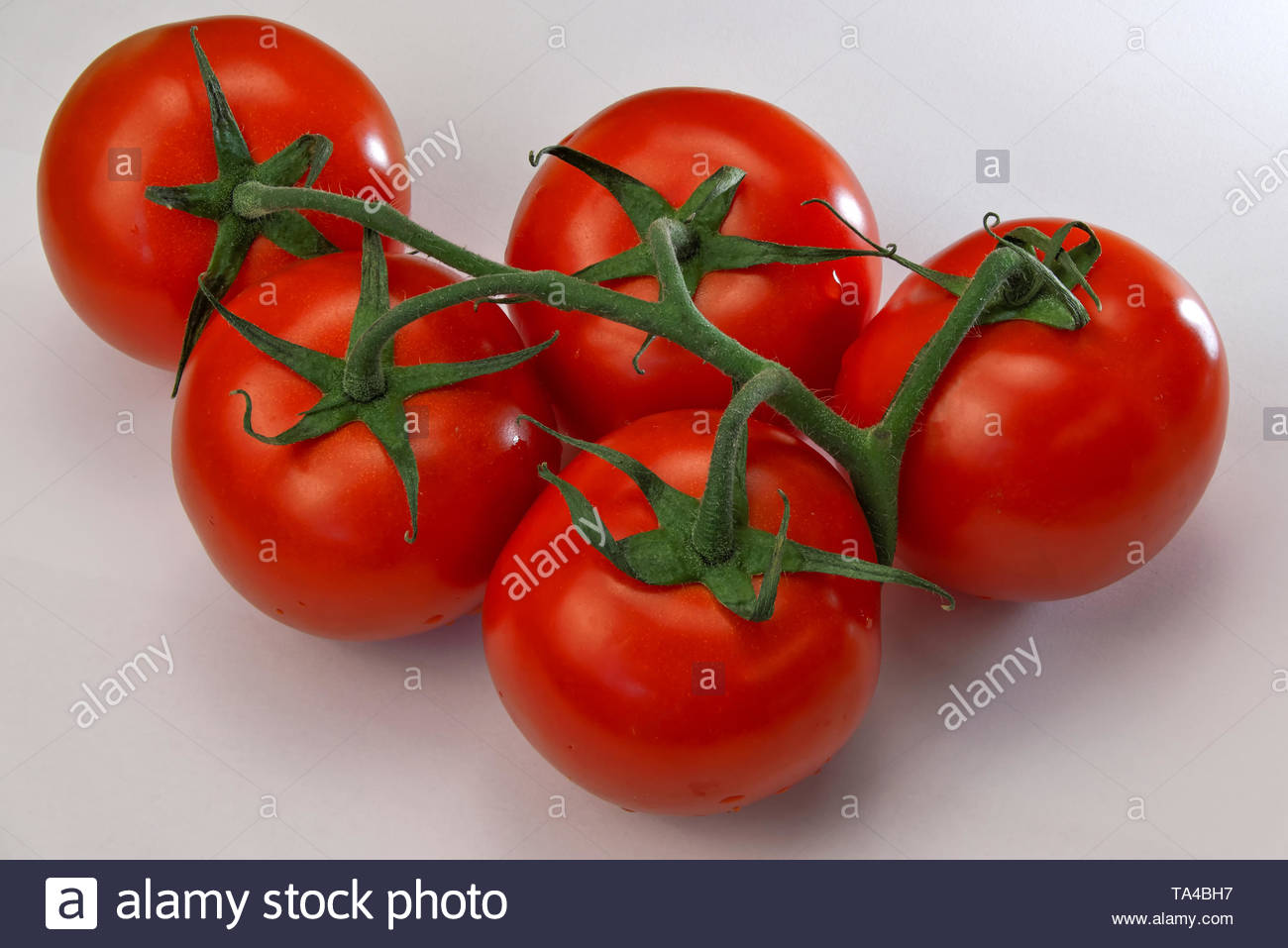 Five red ripe tomatoes on a twig on a white background close-up - Stock Image
