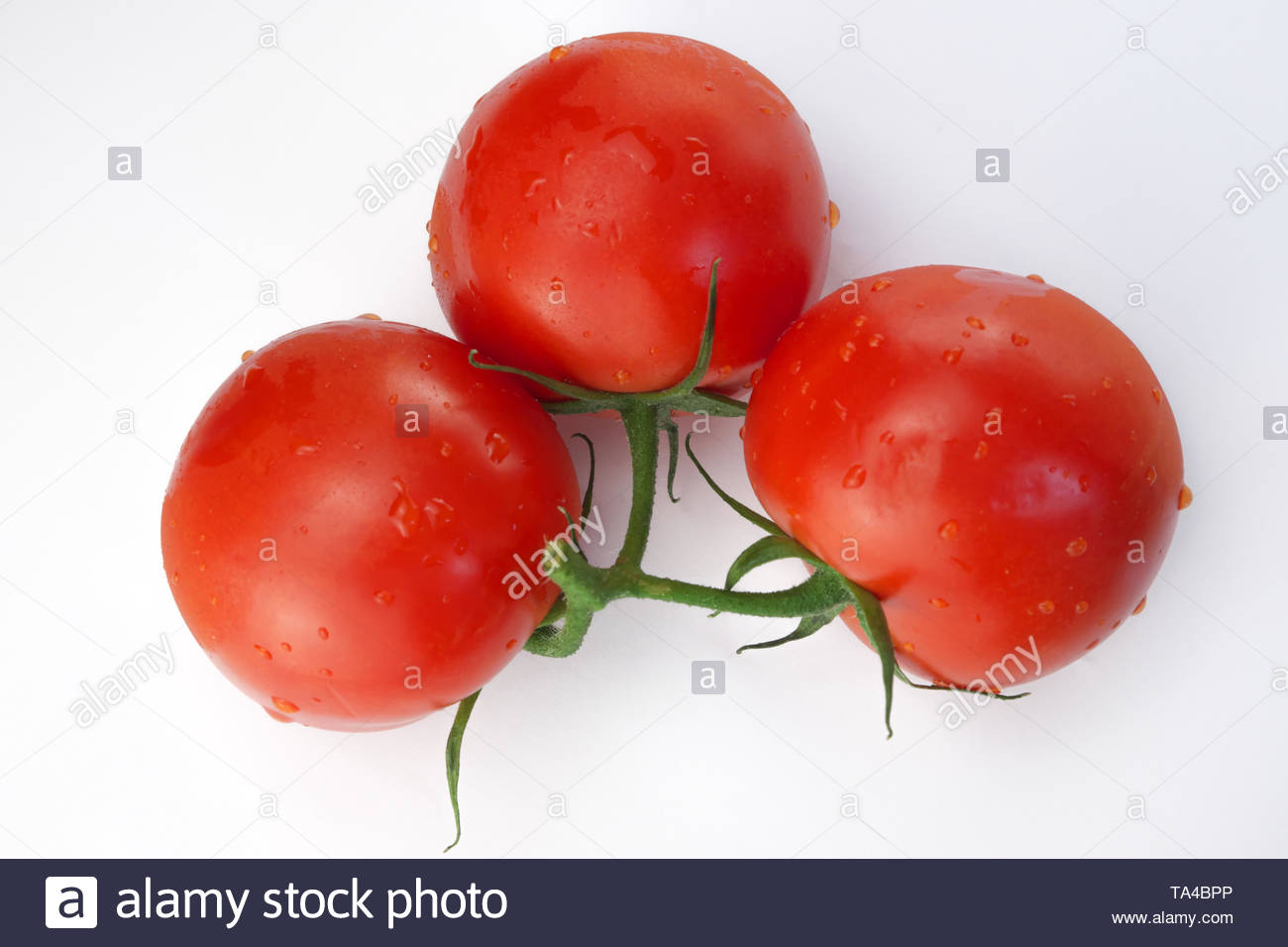 Three red ripe tomatoes on a twig on a white background close-up - Stock Image