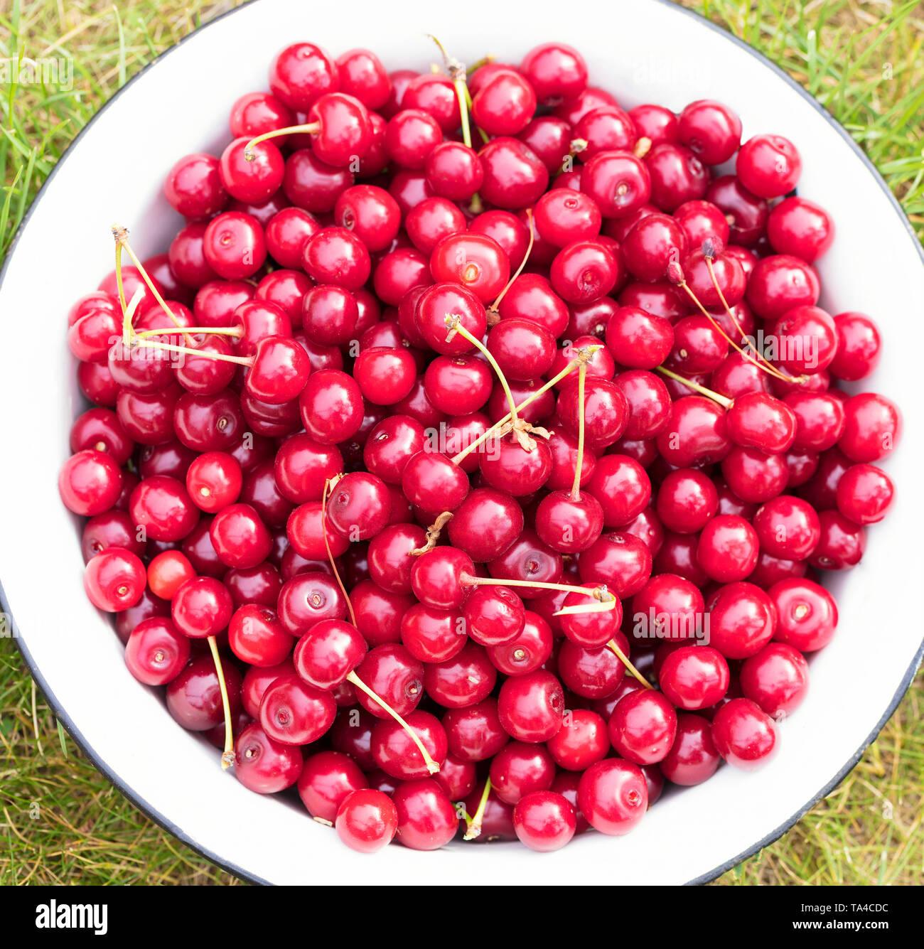 On a white clean plate lies the harvest of red ripe cherries. Top view of a close-up. - Stock Image