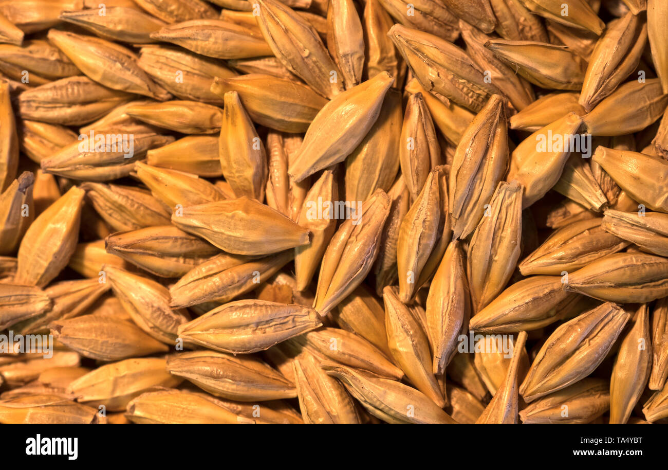 Loose dry cereal grains Stock Photo