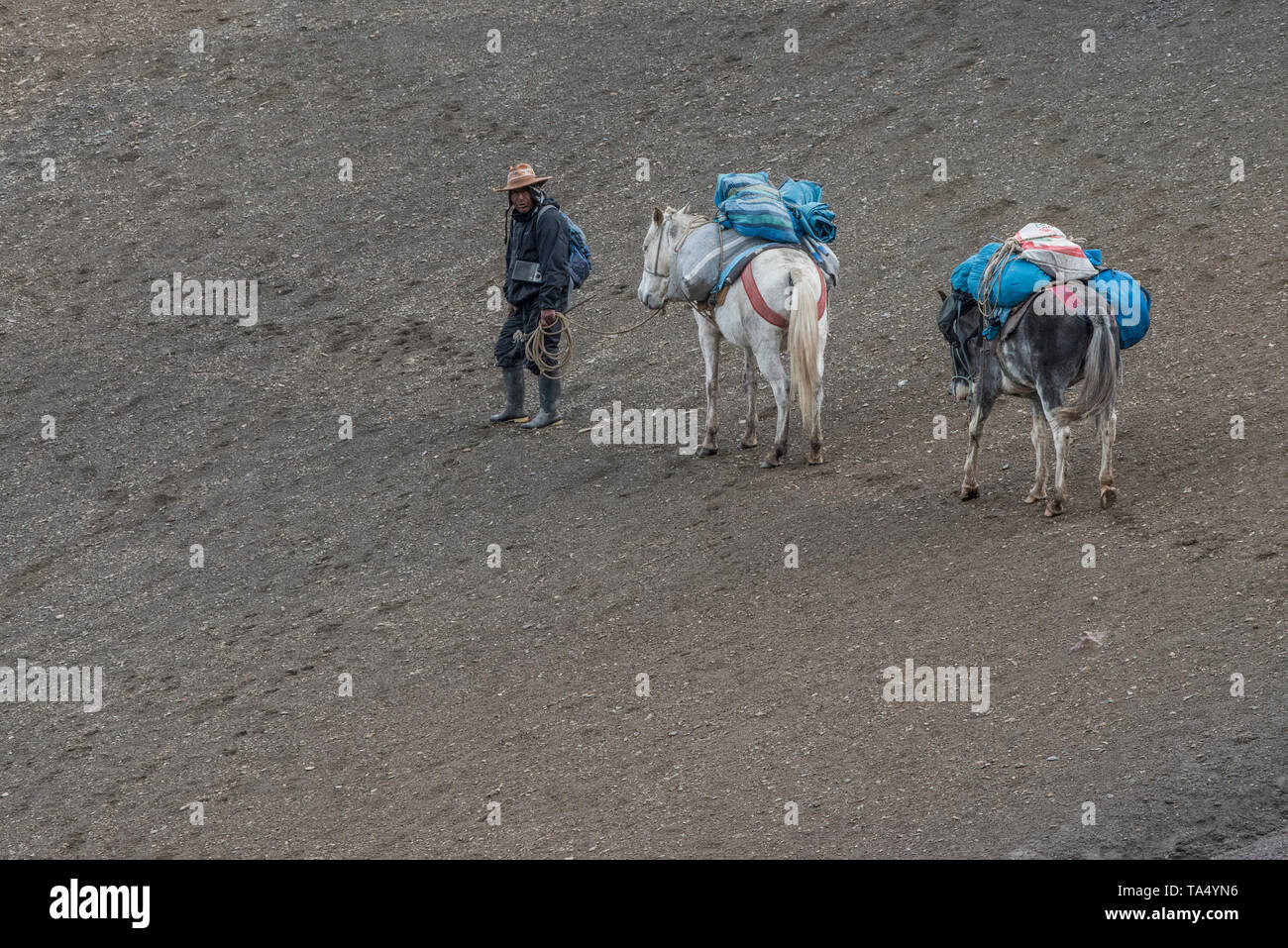 A quechua man working as an arriero leads a fully loaded packhorse up a steep slope in the Andes Mountains in Southern Peru. - Stock Image