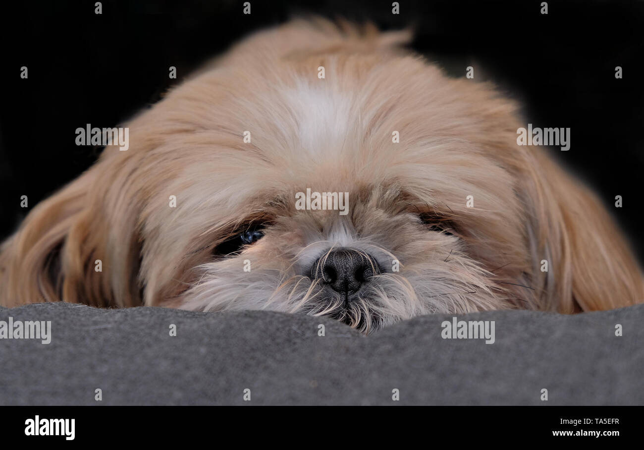 A dog can be your best friend - Stock Image