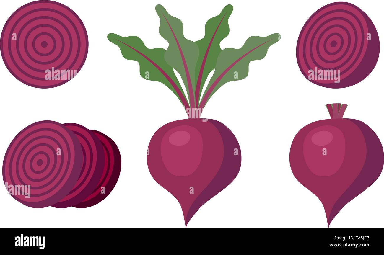 vector whole beet root with leaves and without leaves, half of beet and slices of beet isolated on white background. beetroot vegetable for healthy ve - Stock Image