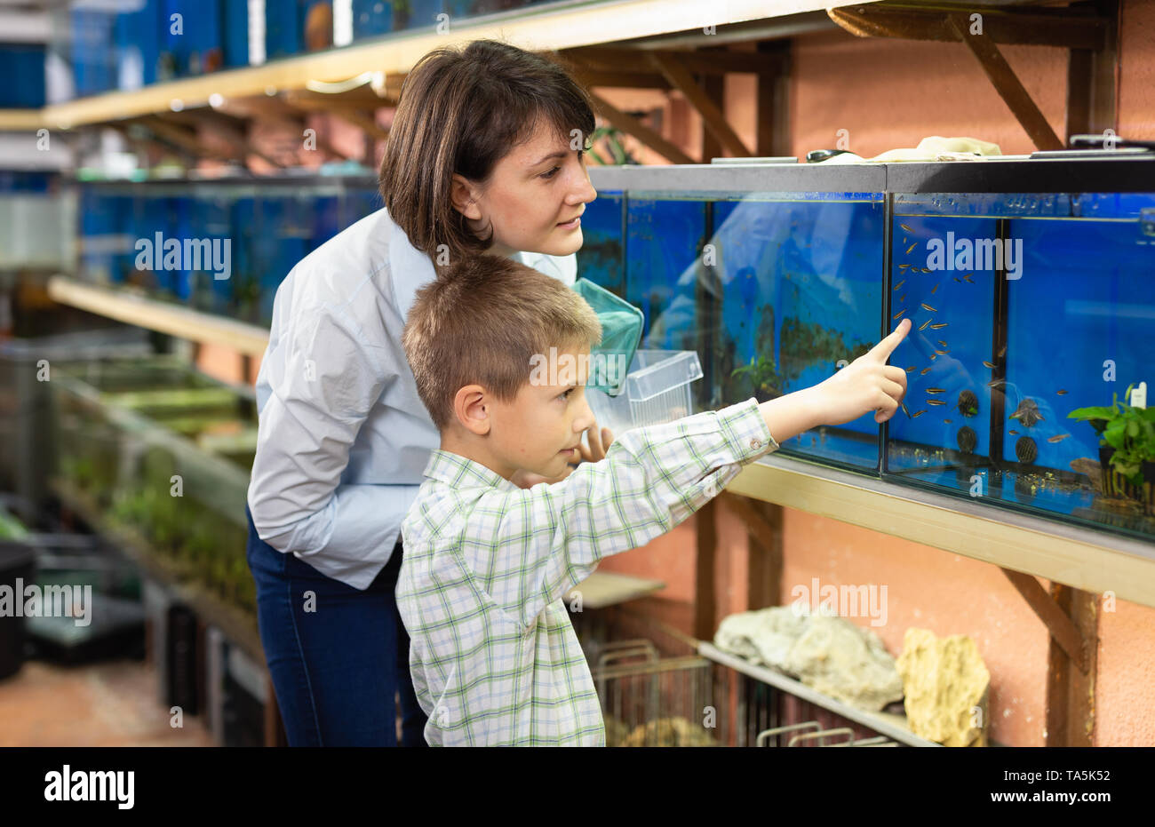 Preteen boy with mother choosing tropical fish for home aquarium in petshop - Stock Image