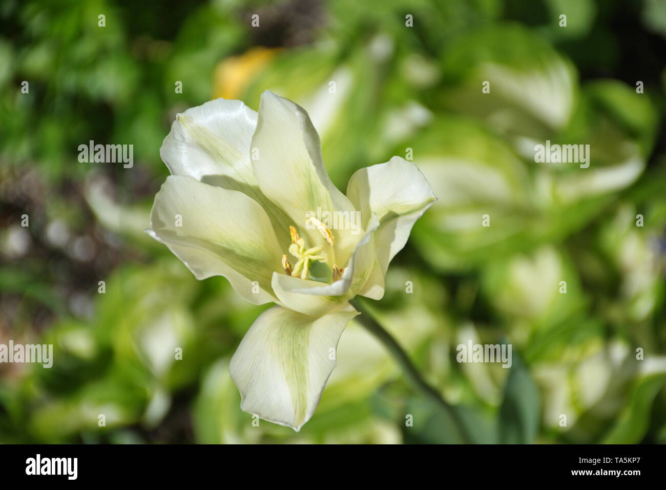 Closeup of green flower on the green background - Stock Image