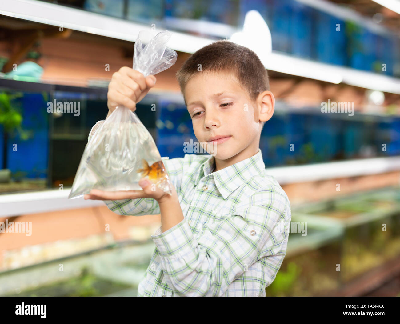 Portrait of happy cute preteen boy with goldfish for home aquarium in petshop - Stock Image