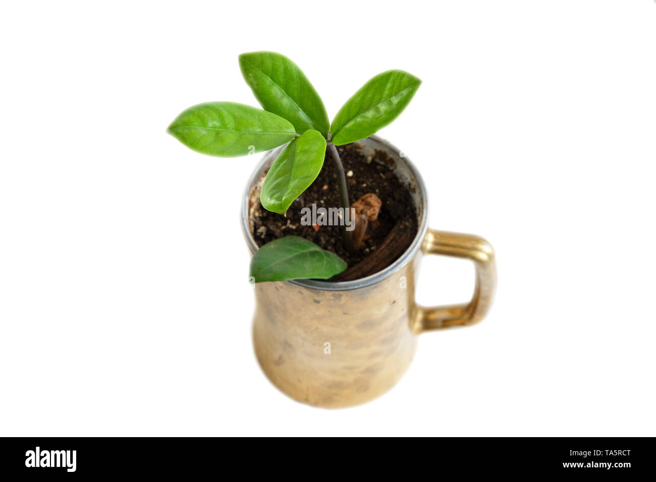 Cells for seedlings at home. Growing plants on the windowsill. Stock Photo