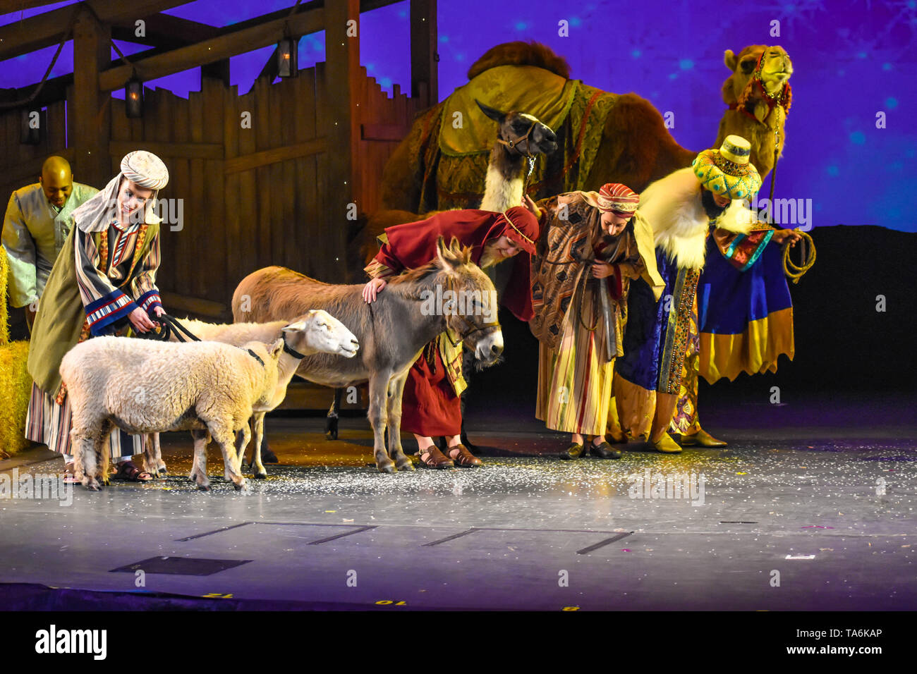 Orlando, Florida. December 19, 2018. Christmas Celebration with real animals at Seaworld in International Drive area (2) - Stock Image