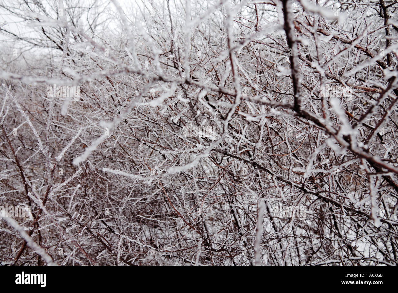 Natural disaster in form of ice rain came to southern region of Eastern European part. Beautiful full-scale glaciation all around - Stock Image