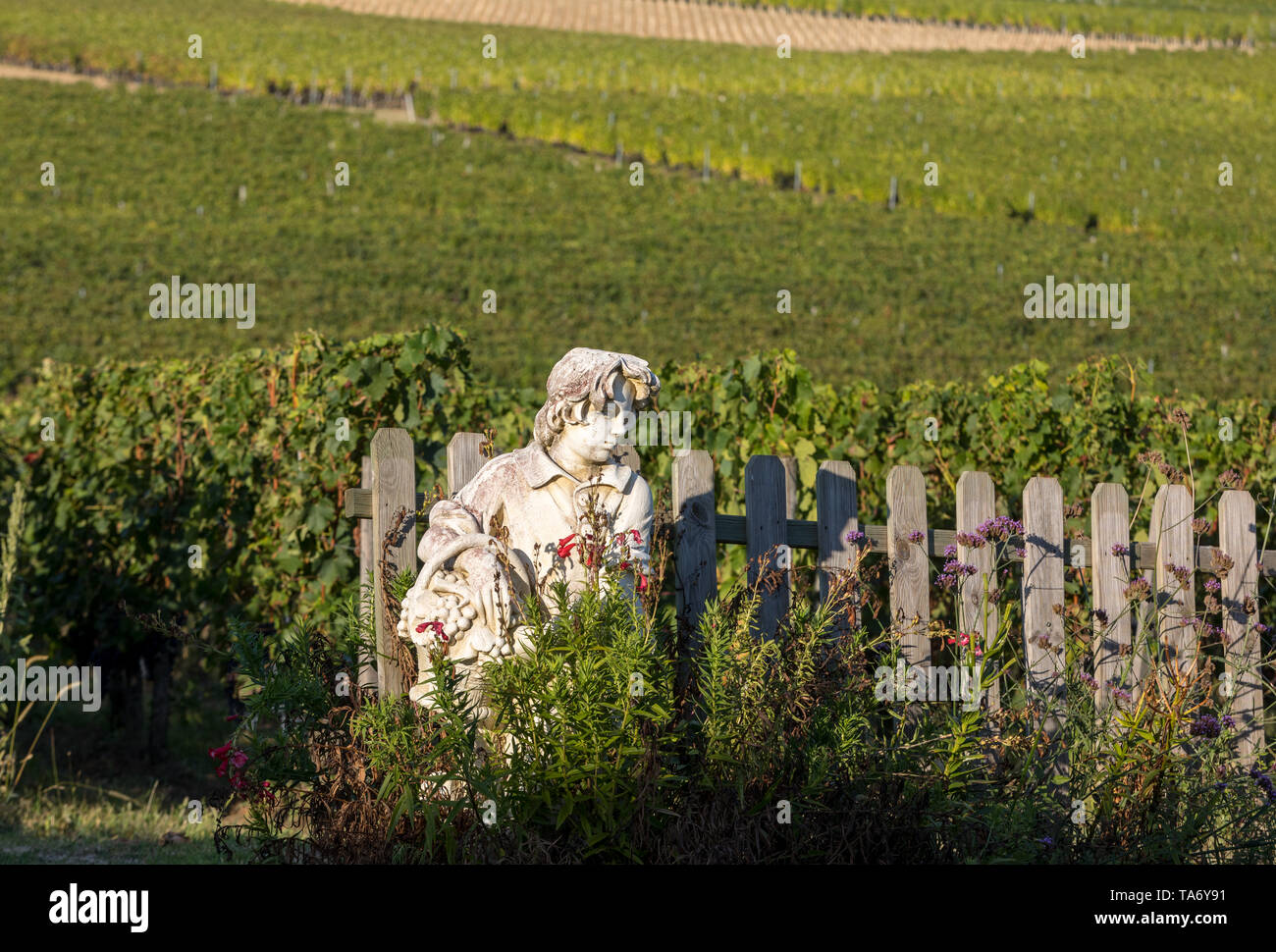 Saint Emilion, France - September 8, 2018: Statue of a boy holding a basket with grapes on the background of vineyards in the Saint Emilion region. Fr - Stock Image