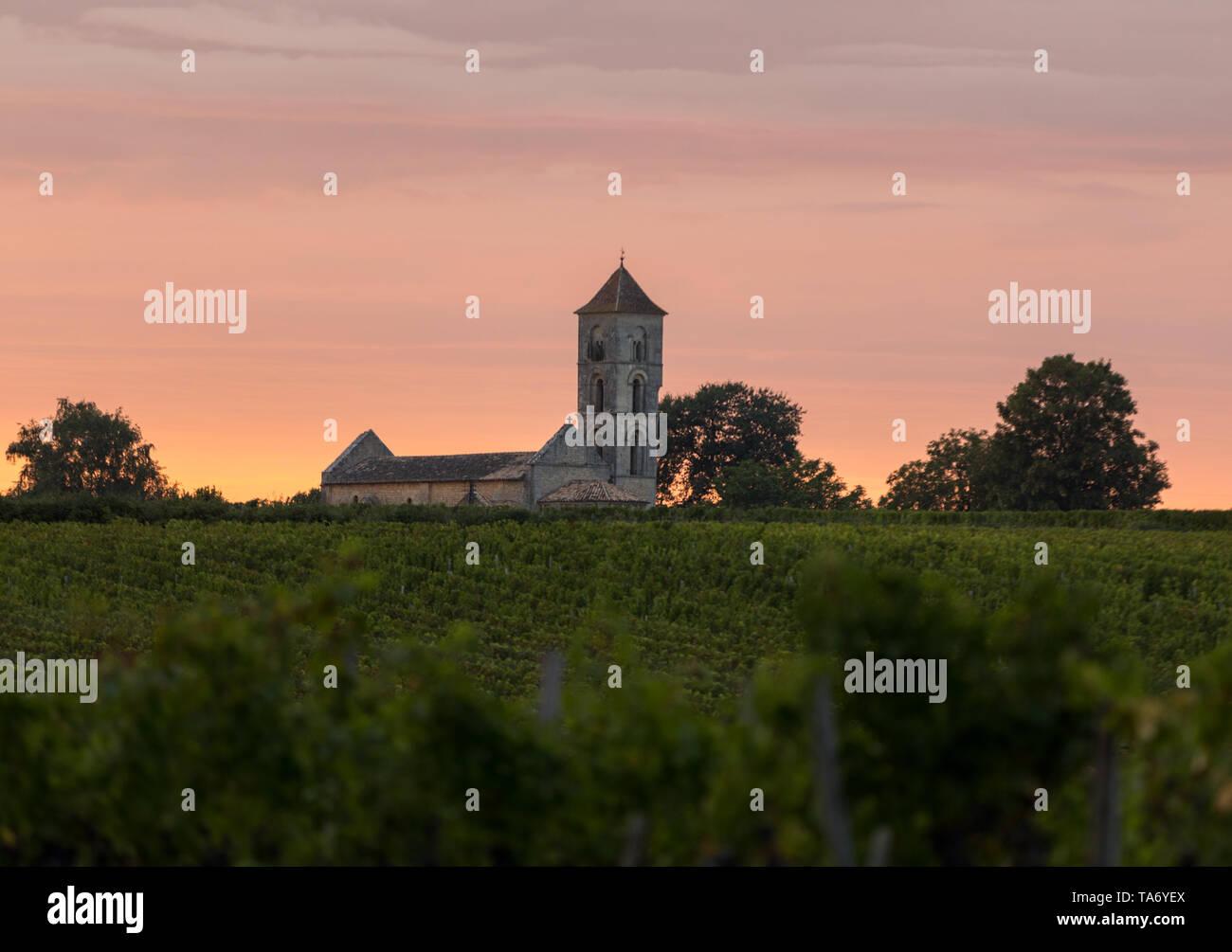 Sunset over the vineyards of Montagne near Saint Emilion. Gironde, Aquitaine. France - Stock Image