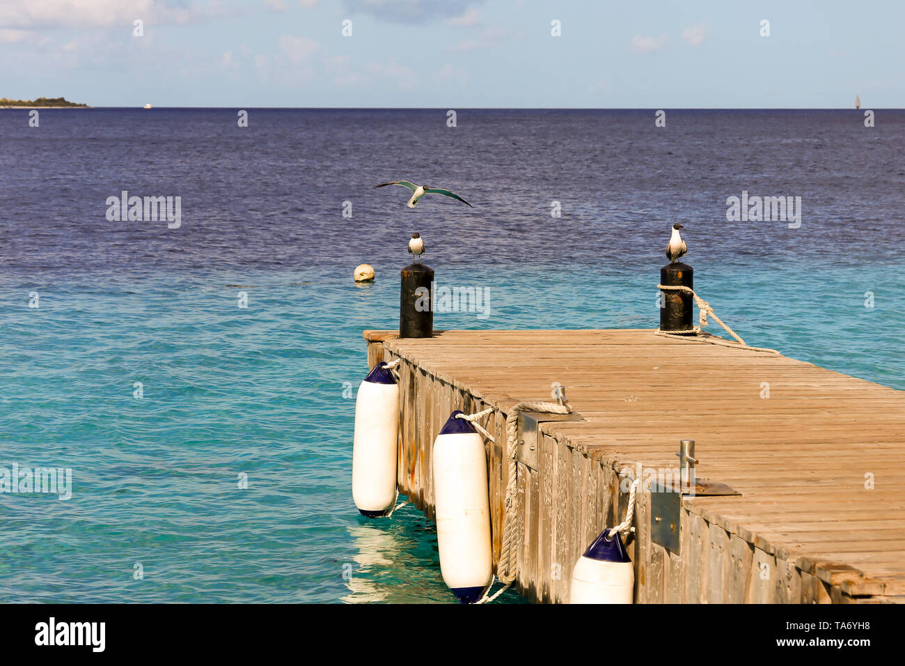 wooden pier leading out to sea with two birds sitting on beams with one bird flying into land - view out across the ocean with birds in the foreground - Stock Image