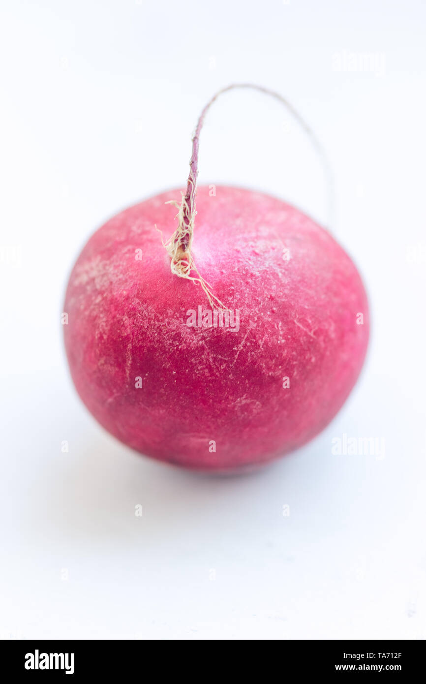 One pink radish on the white table. - Stock Image