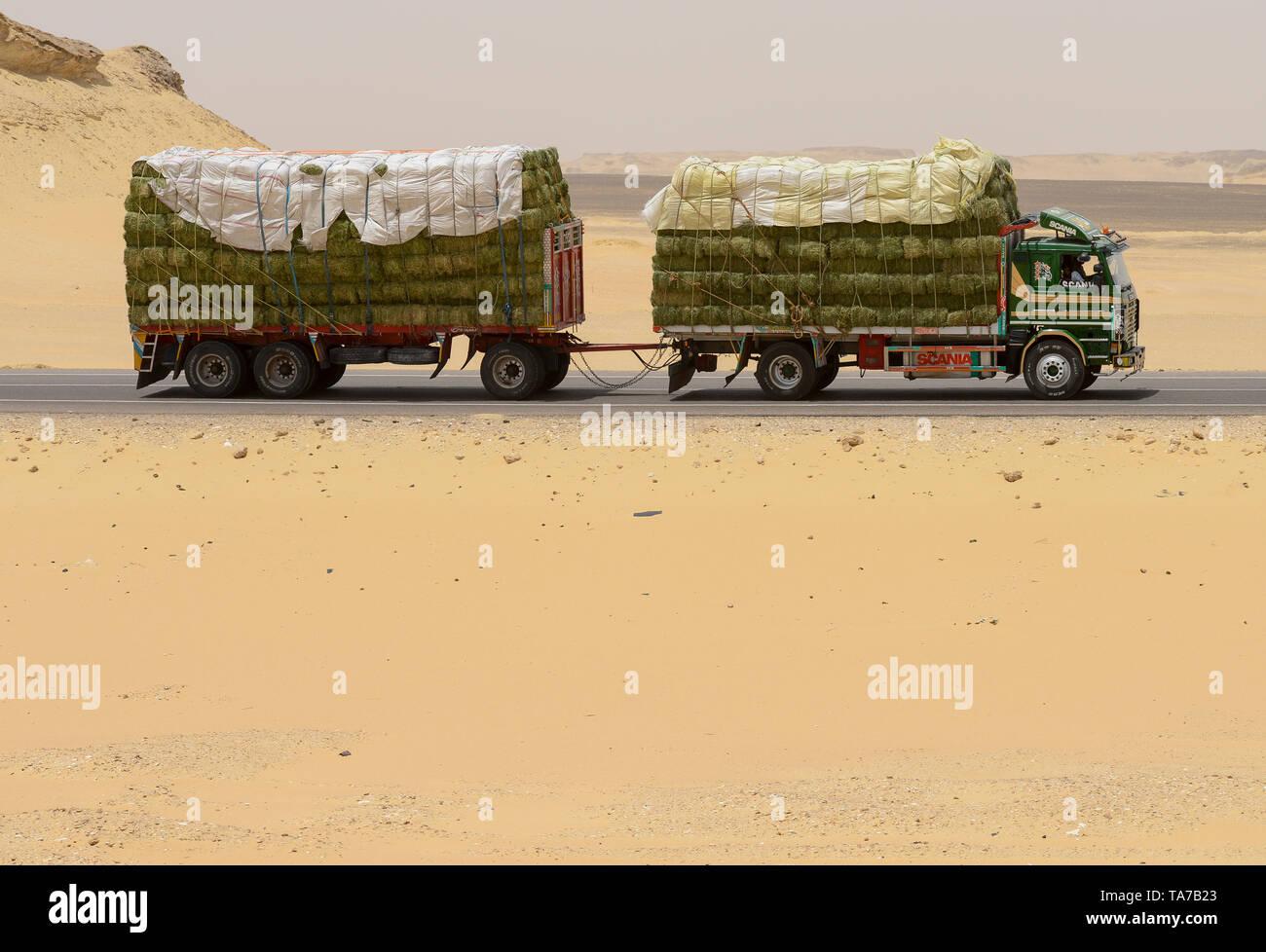 EGYPT, Farafra, truck transport hay for animal feed from large desert farms for export to Saudi Arabia / AEGYPTEN, Farafra, LKW transportiert Heu aus grossen Wuestenfarmen als Tierfutter fuer Export nach Saudi Arabien - Stock Image