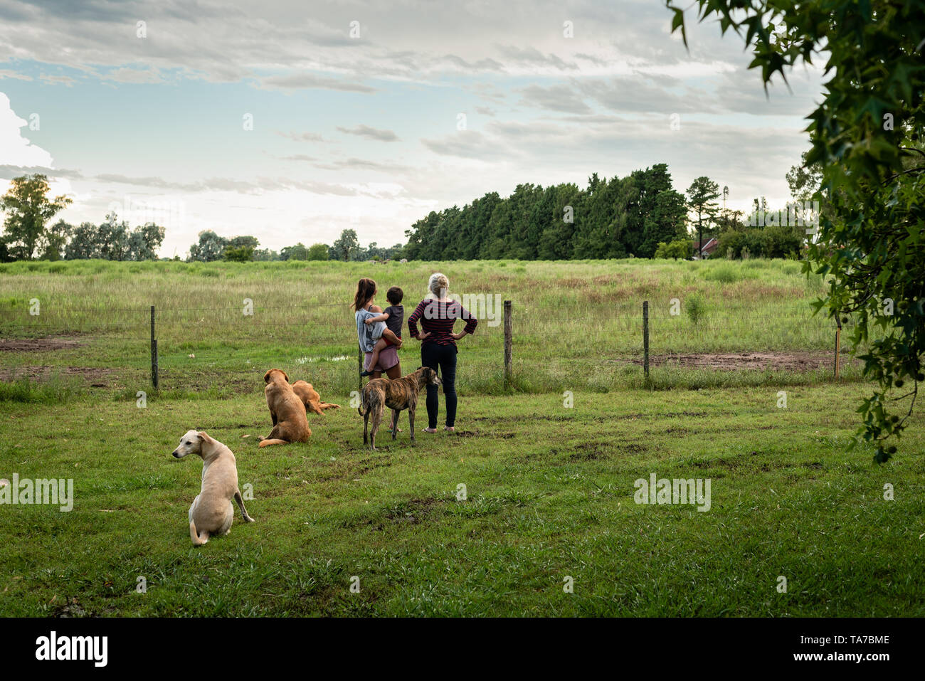 outdoor portrait of family and dogs looking away from back at nature and land - Stock Image