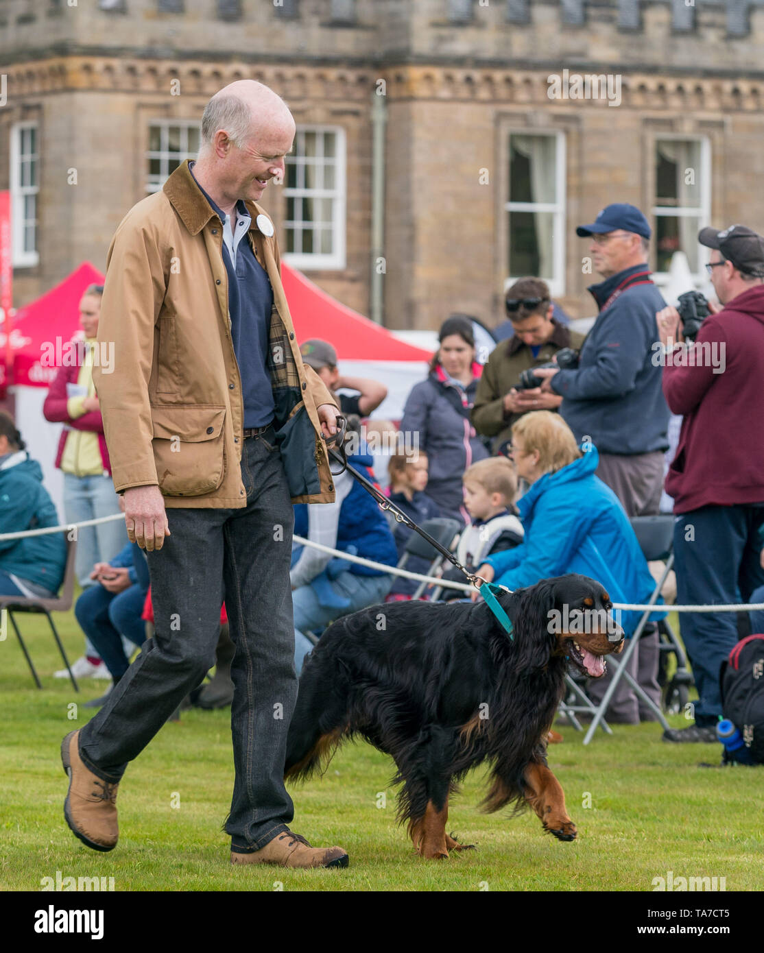 19 May 2019, Gordon Castle, Fochabers, Moray, Scotland, UK. This is a scene from the Highland Games and Country Fair. This is a Gordon Setters at the  - Stock Image
