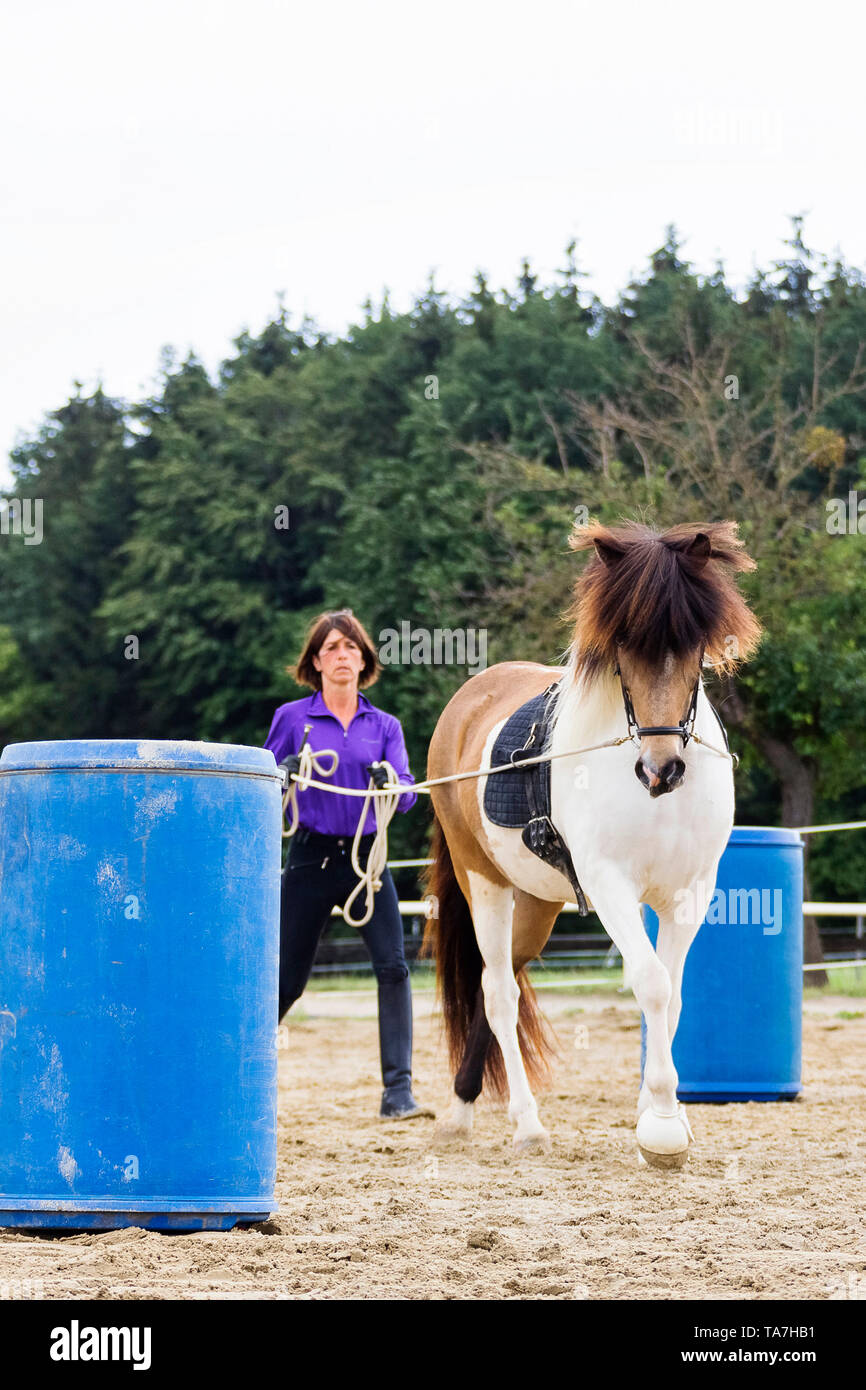 Ground driving, also called long-lining: Teaching a young horse to move forward with a person walking behind it, a precursor to both harness driving and having reins used by a mounted rider. Austria - Stock Image