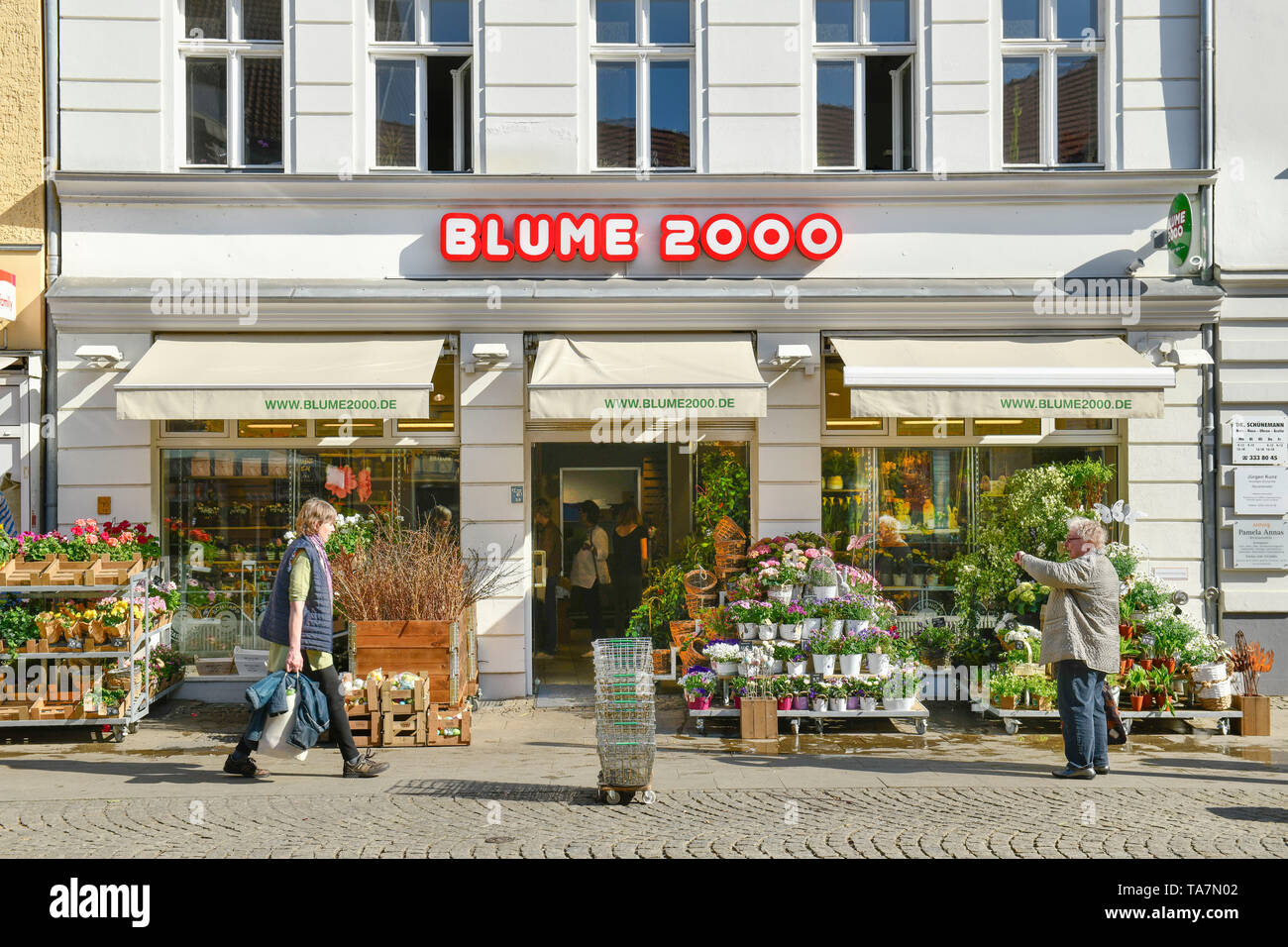 Flower in 2000, Carl apron street, Old Town, Spandau, Berlin, Germany, Blume 2000, Carl-Schurz-Straße, Altstadt, Deutschland - Stock Image