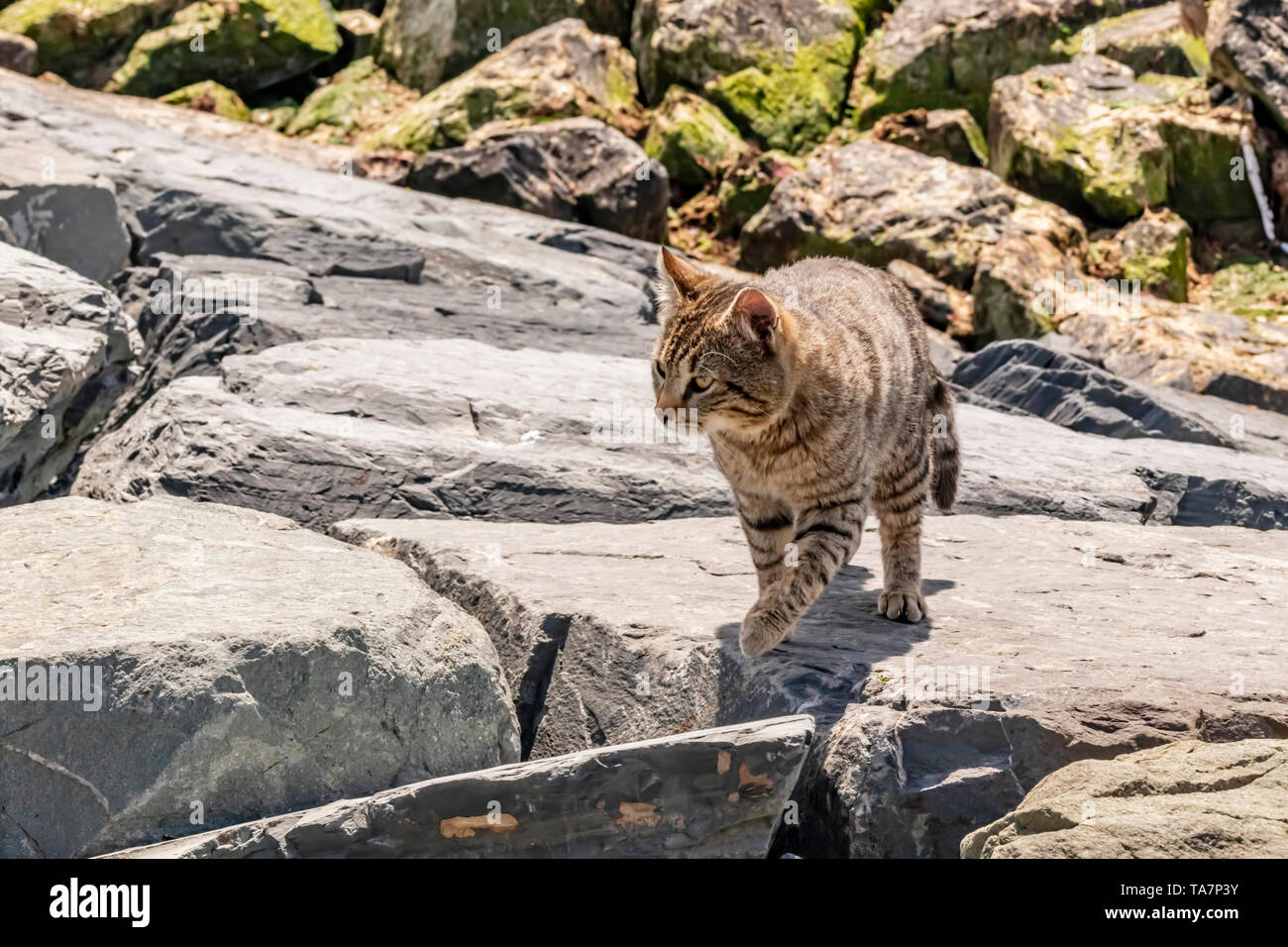 close up cute friend cats in nature - Stock Image