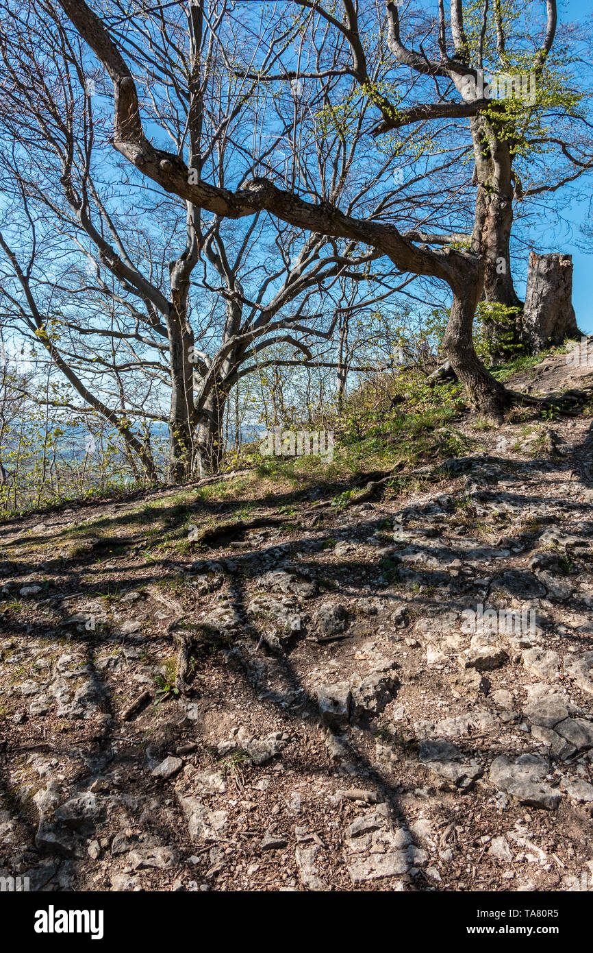 A little hill with stones, trees and roots Stock Photo