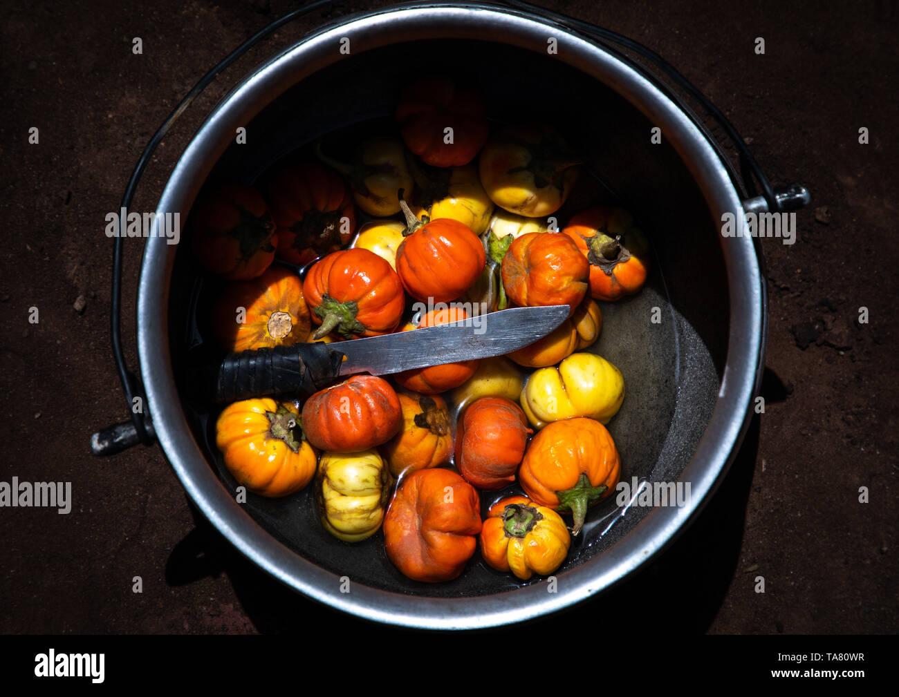 Eggplants cooked on a fireplace, Savanes district, Tcheregnimin, Ivory Coast Stock Photo