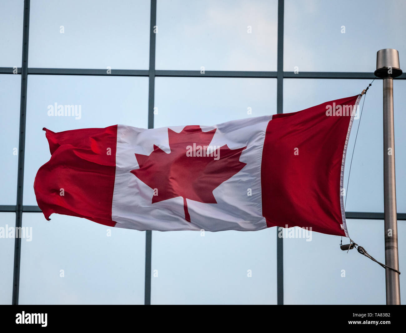 Canadian flag in front of a business building in Ottawa, Ontario, Canada. Ottawa is the capital city of Canada, and one of the main economic, politica - Stock Image