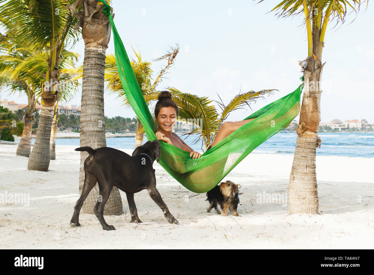 Happy woman is lying in the hammock on the beach with dogs - Stock Image