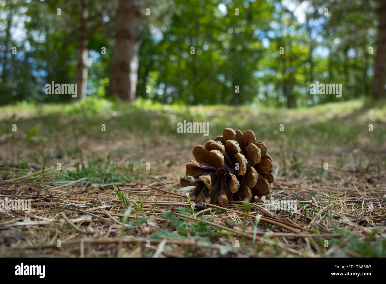 Cone Stock Photos Cone Stock Images Page 3 Alamy