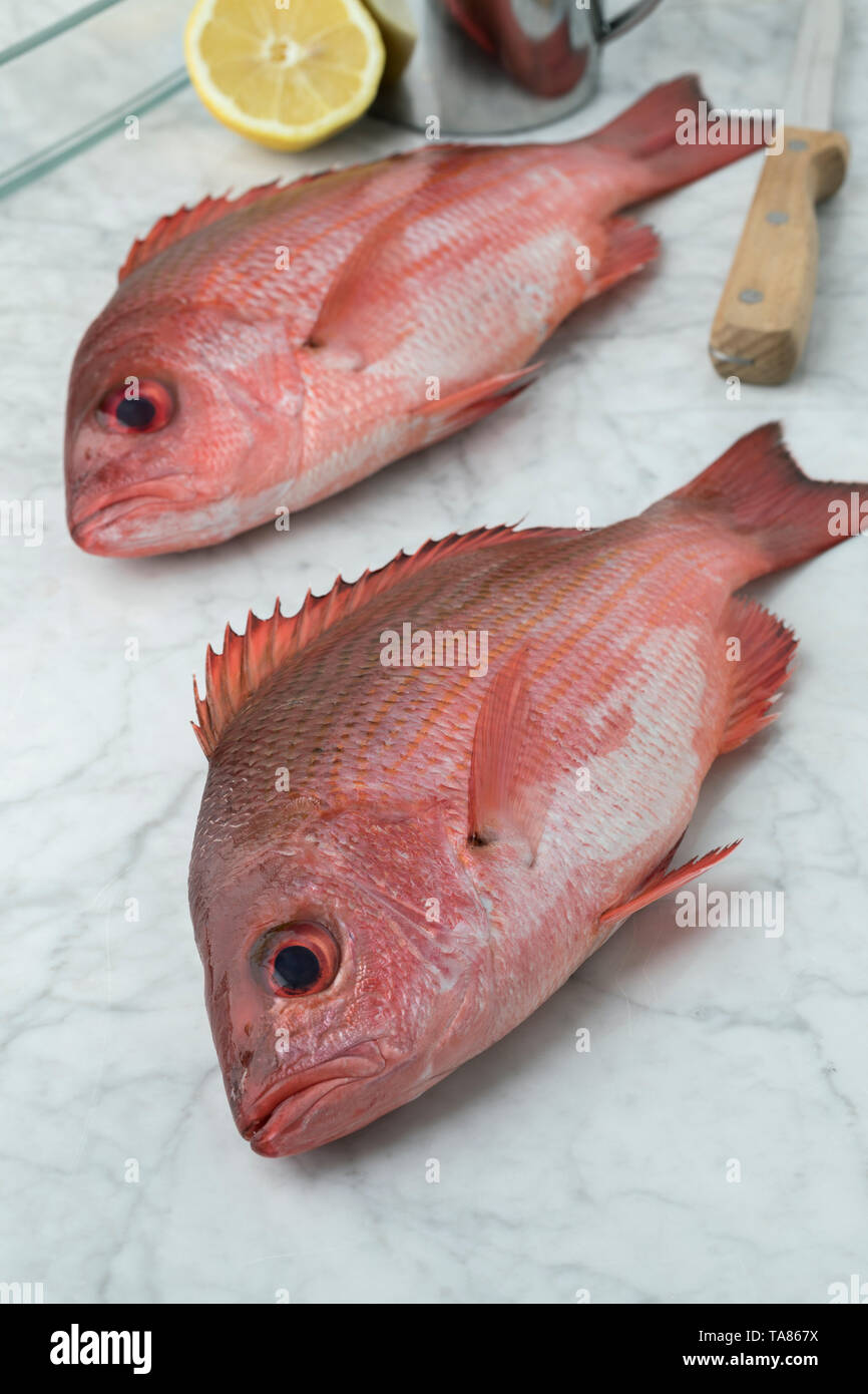 Two Northern red snappers in the kitchen ready to cook Stock Photo